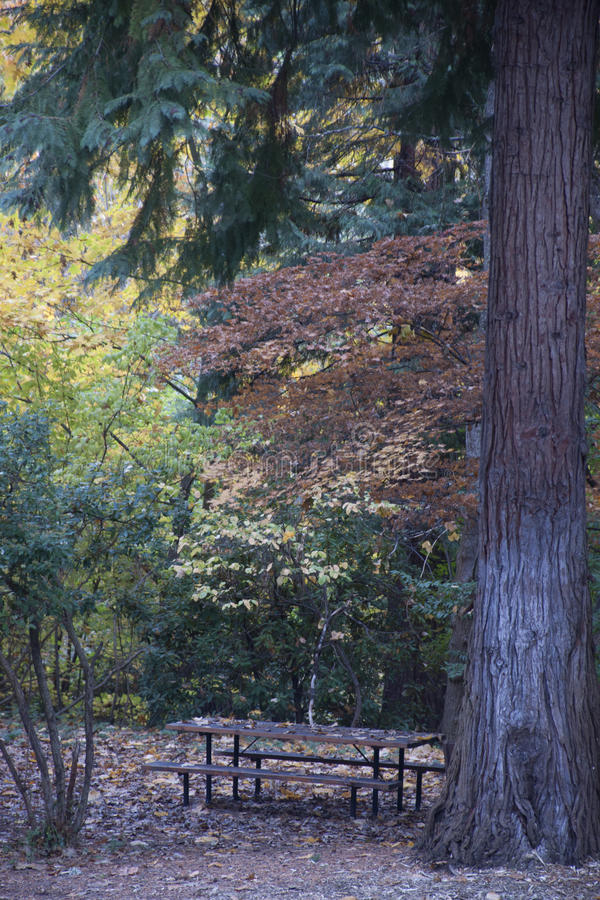 Download Lithia Park Ashland, Oregon Stock Afbeelding - Afbeelding bestaande uit kreek, picknick: 54084121