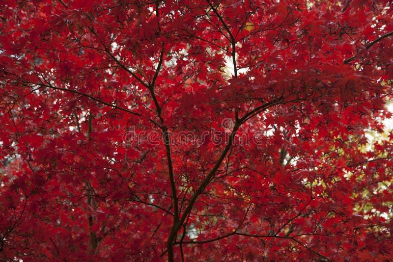 Download Lithia Park Ashland, Oregon Stock Image - Image of trees, creek: 54083771