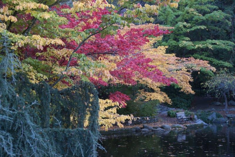 Lithia Park Ashland, Oregon royalty free stock photos
