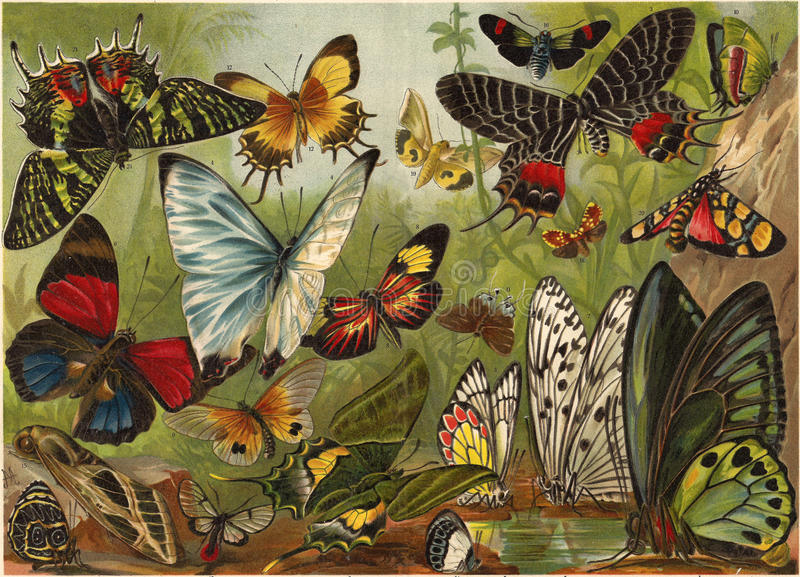 Lithography of butterflies royalty free illustration