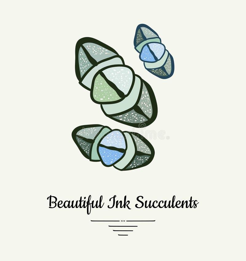 Lithopshand getrokken succulente vector ge?soleerde illustratie Het moderne embleem van de inkt succulente installatie, pictogram vector illustratie