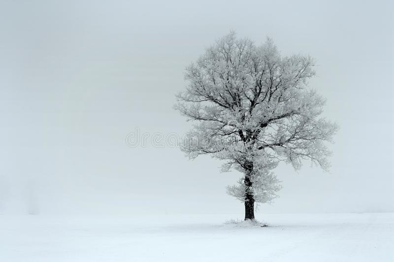 Foggy winter day.Lonely tree on a field royalty free stock photos