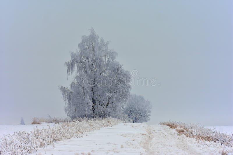 Foggy winter day. Trees near road stock photos