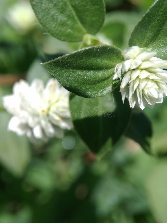 Litle花和graas在庭院里 库存图片