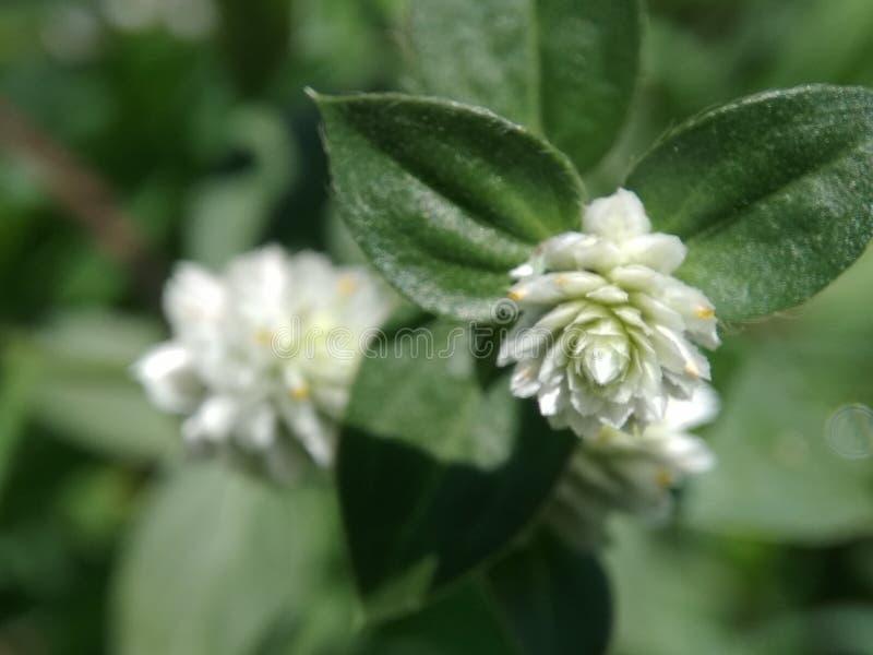 Litle花和graas在庭院里 免版税库存照片