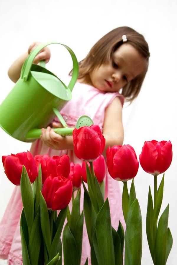 Litlle Mädchen, das ein bouqet der roten Tulpe droping ist stockbilder