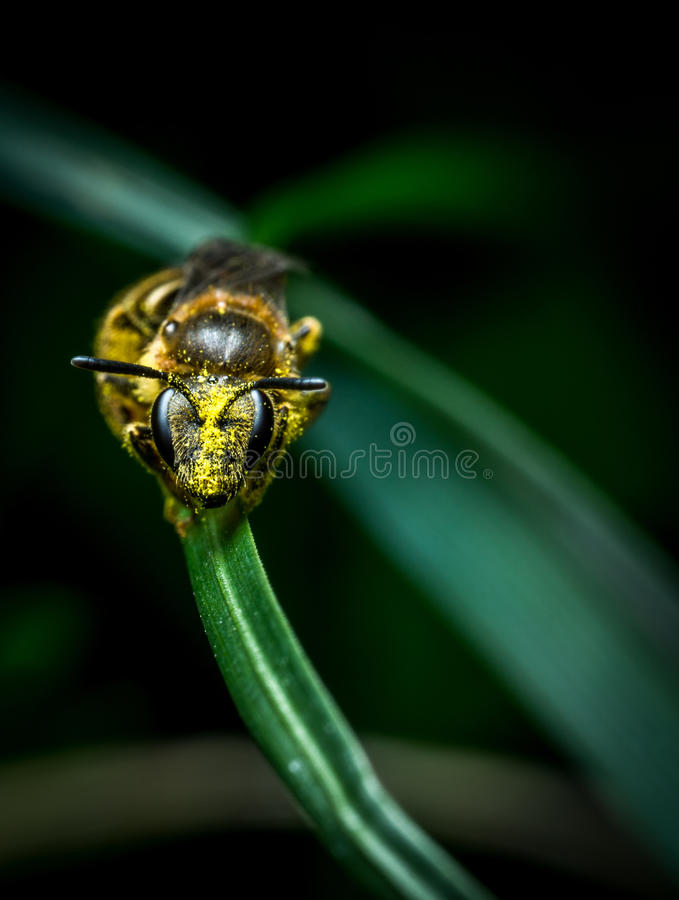Litlle wasp on grass royalty free stock image