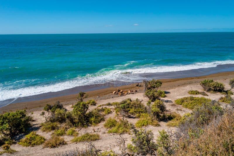 Litoral bonito de Oceano Atlântico no Patagonia com leões-marinhos da colônia, Argentina de Valdes da península foto de stock