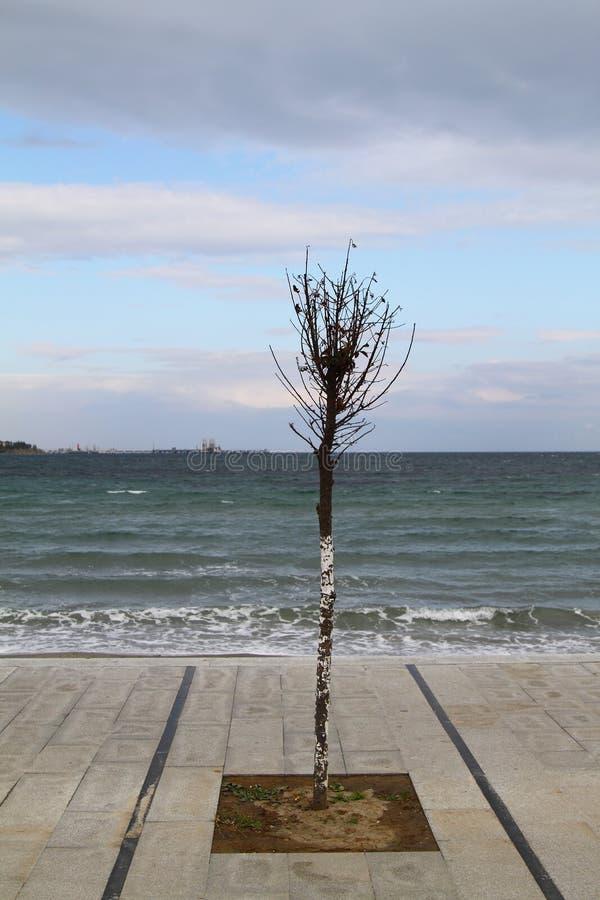 Litoral de um solo de uma cor brilhante com uma ?rvore ajuntada na dire??o do vento Cor verde do mar Mediterr?neo Montanhas dentr fotografia de stock