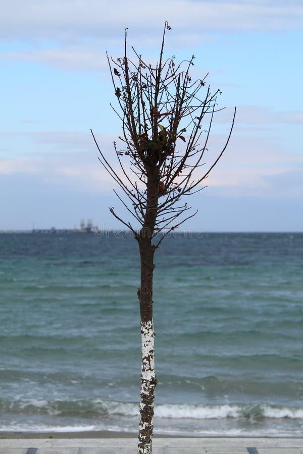 Litoral de um solo de uma cor brilhante com uma ?rvore ajuntada na dire??o do vento Cor verde do mar Mediterr?neo Montanhas dentr imagens de stock