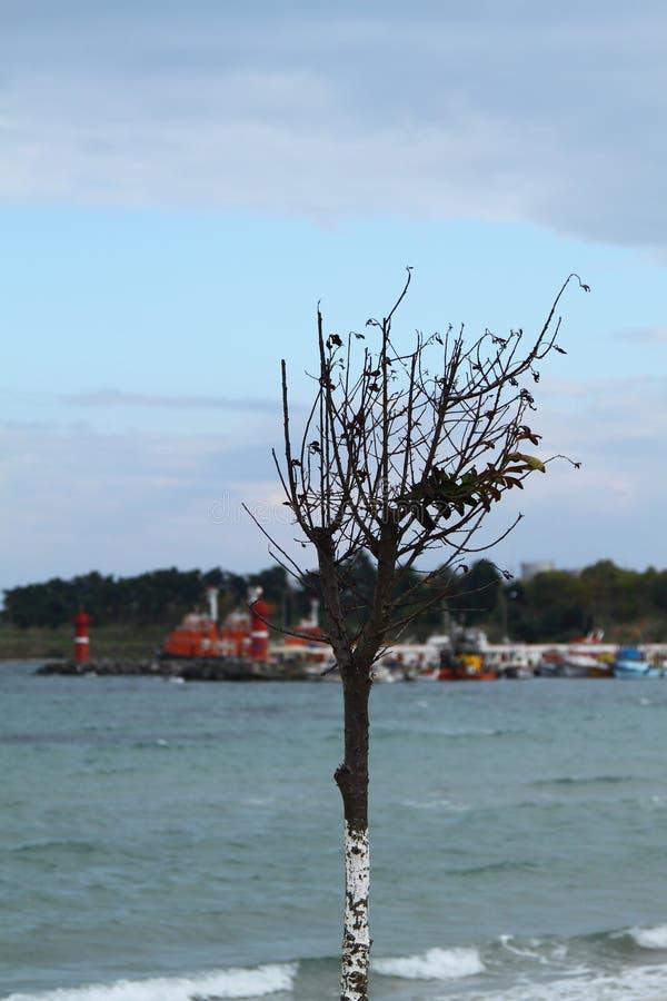 Litoral de um solo de uma cor brilhante com uma ?rvore ajuntada na dire??o do vento Cor verde do mar Mediterr?neo Montanhas dentr fotos de stock royalty free