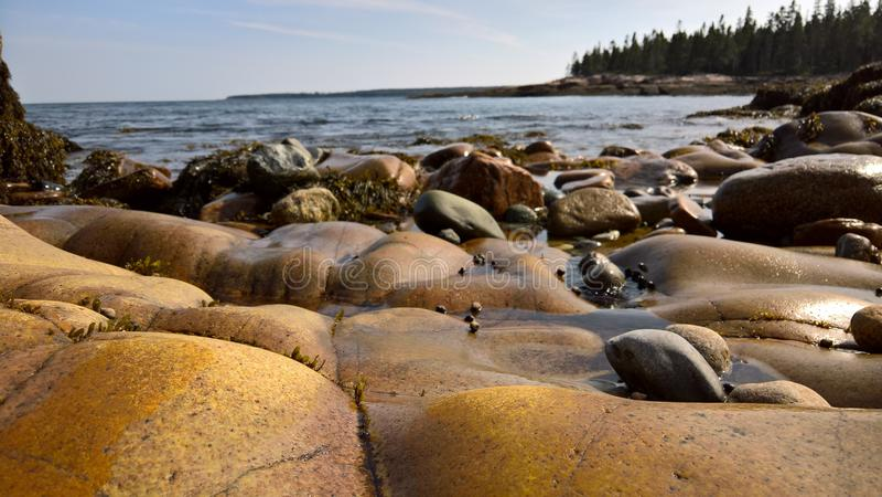 Litoral do parque nacional do Acadia imagens de stock