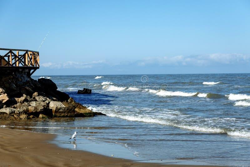 Litoral e gaivota na areia perto do mar fotos de stock