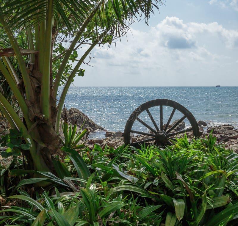 Download Litoral em um tropical foto de stock. Imagem de jardim - 65575796