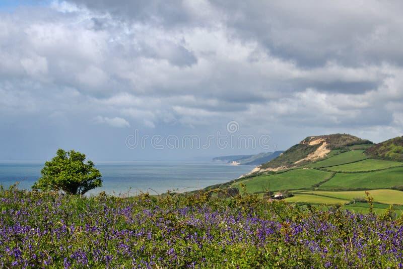 Litoral negligencie de Eype, Dorset foto de stock royalty free