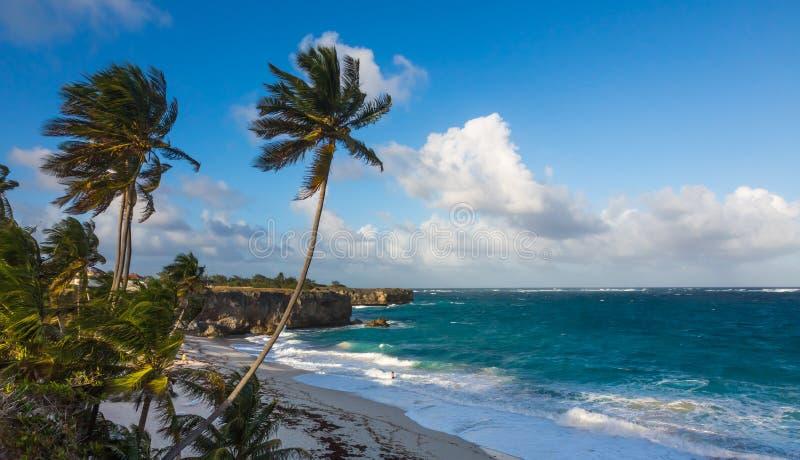 Litoral tropical bonito com palmeiras e penhascos foto de stock royalty free
