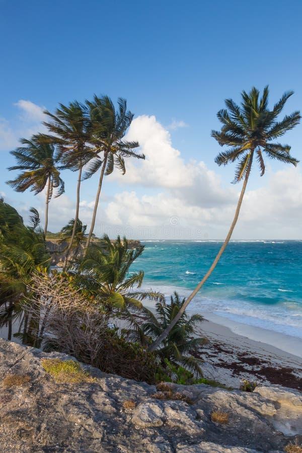 Litoral tropical bonito com palmeiras e penhascos imagem de stock royalty free