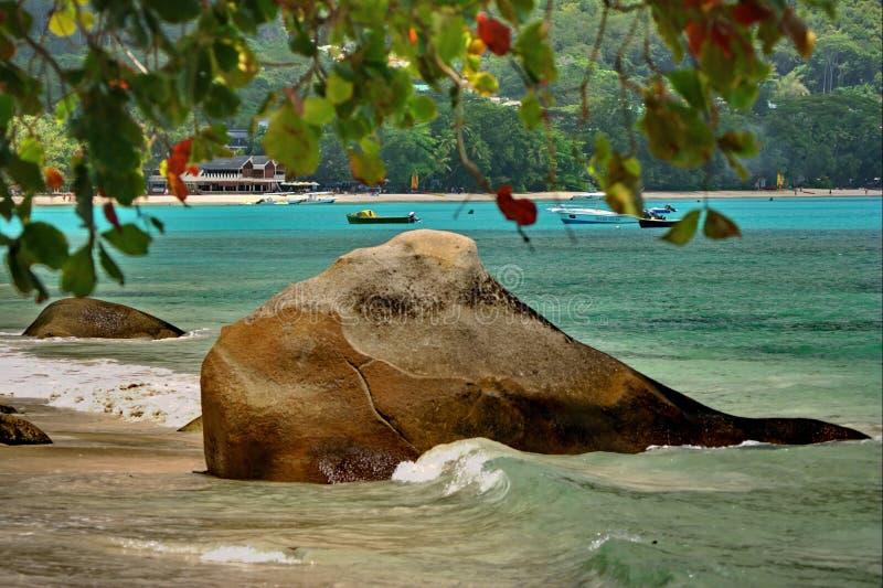 Litorale della roccia dei pesci. Divertimento della natura fotografie stock