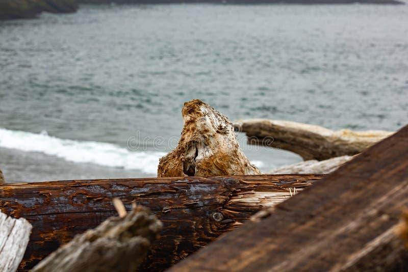 litorale dello slong dei ceppi del legname galleggiante ed acque blu fotografia stock