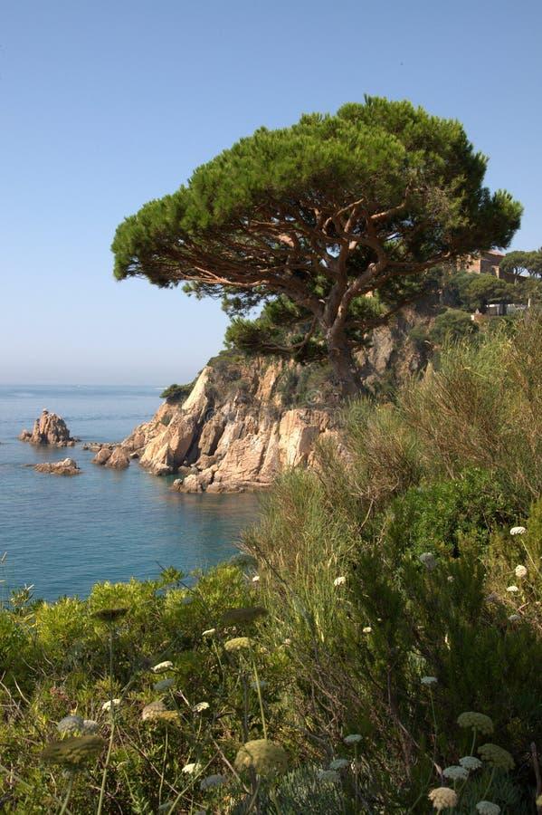Litorale di Blanes, Spagna immagini stock libere da diritti