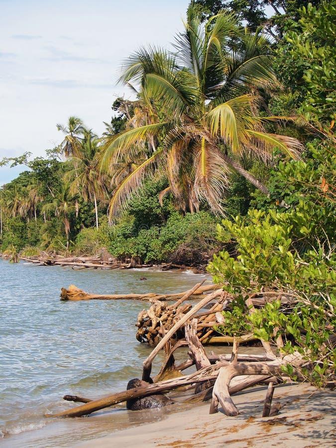 Litorale selvaggio della Costa Rica fotografia stock