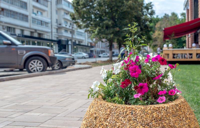 Lits de fleur dans la ville images libres de droits