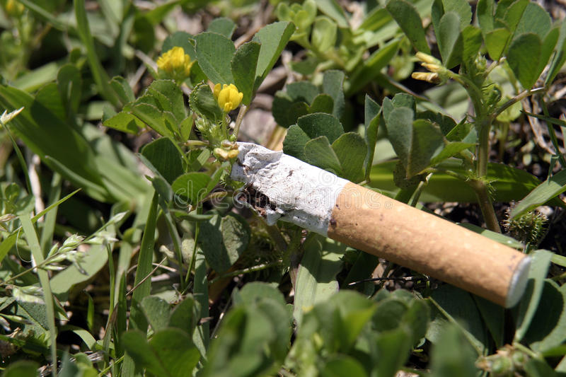 Litter in Clover stock photography