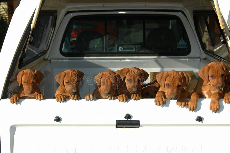 Download Litter of puppies stock image. Image of heads, animals - 2687541