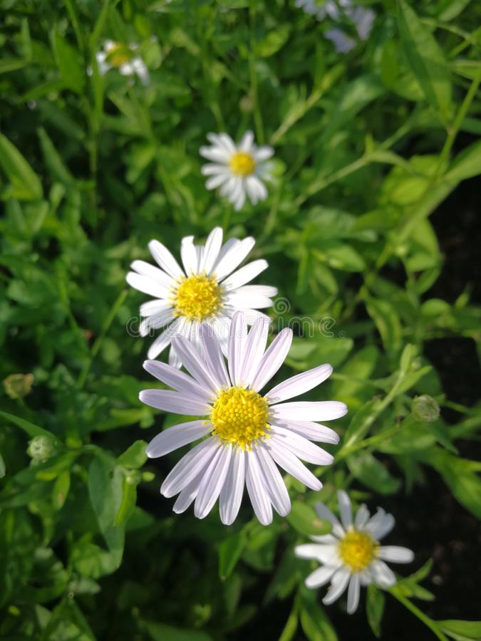 Little†‹flower†‹s stock foto