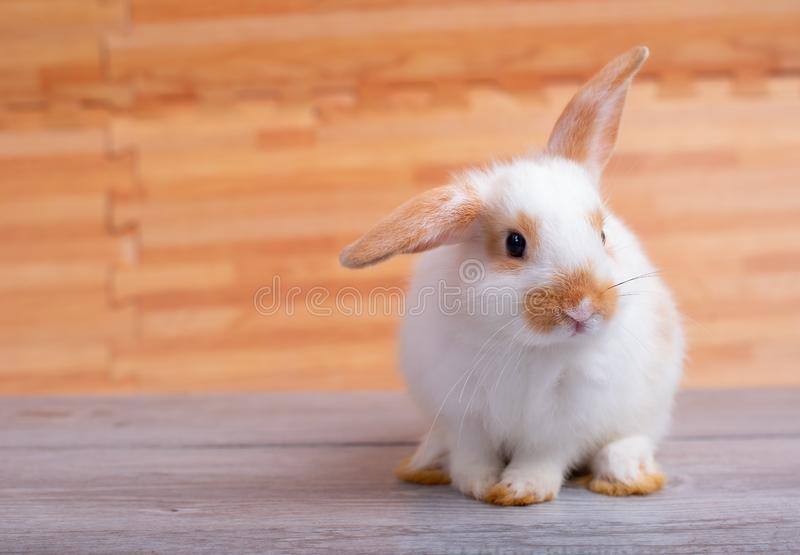 Little adorable bunny rabbit stay on gray table with brown wood pattern as background stock photography