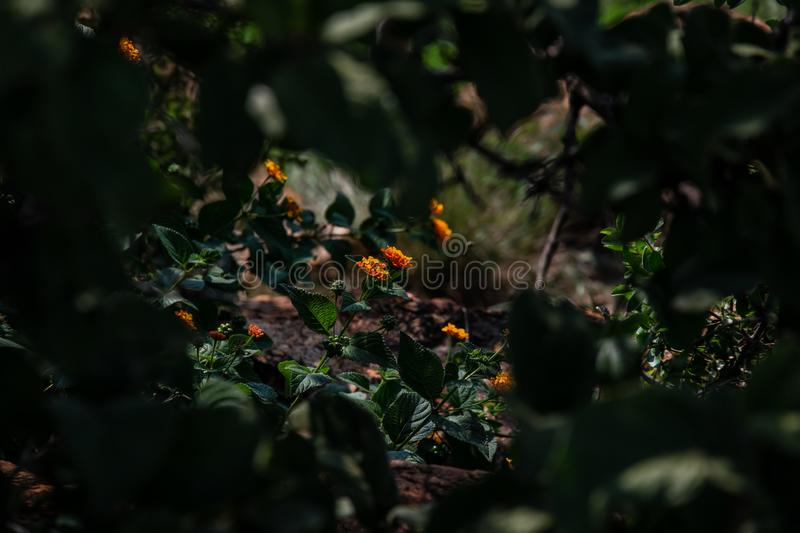 Little African flowers hidden behind bushes and leaves royalty free stock images