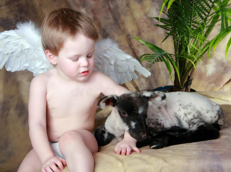 LIttle Angel and his Lamb