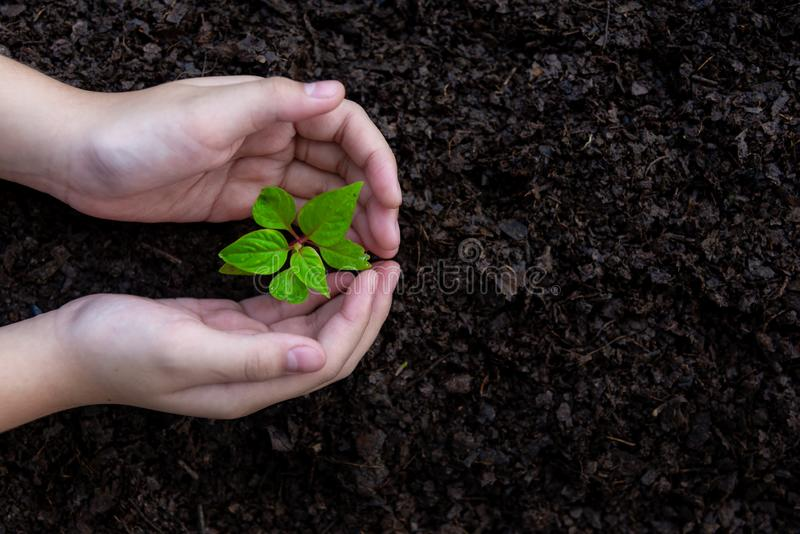 Little asian girl holding young plants in the nature park and see stages of growth of plant and seed for reduce global warming. stock photography