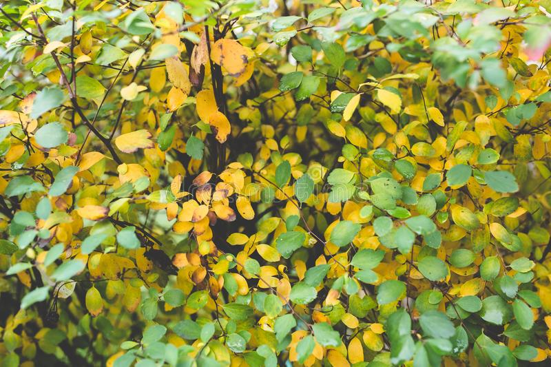Little Autumn Leaves royalty free stock image
