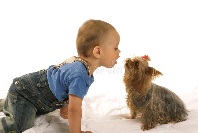 Little baby boy with yorkie royalty free stock image