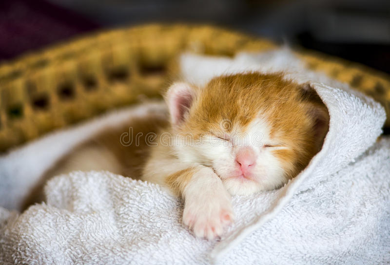 Little baby cat. Sleeping in the basket stock image
