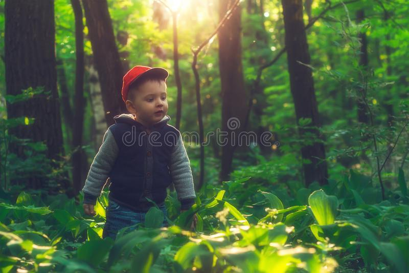 Little baby exploring the wild nature of the mysterious forest. royalty free stock photos