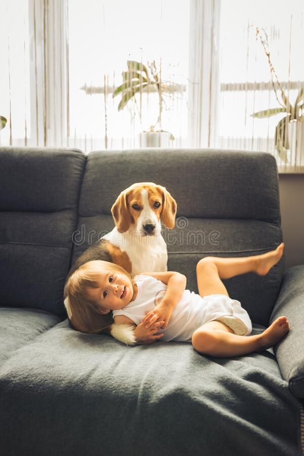 Little baby girl with beagle dog sitting on the sofa at home royalty free stock images
