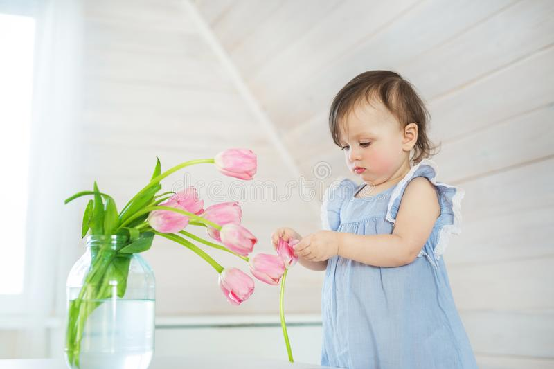Little baby girl in a blue dress plays with a tulips at home stock photo