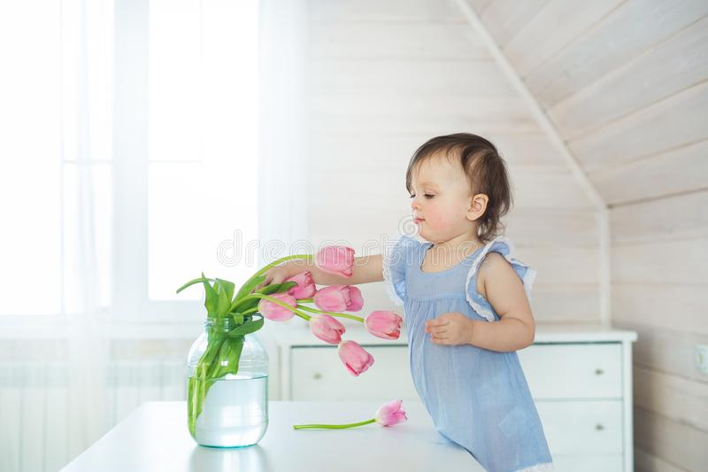 Little baby girl in blue dress touches a tulips on a table stock images