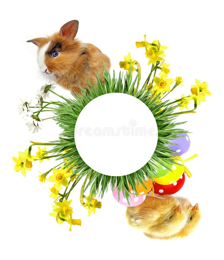 little baby rabbit and chickens sitting in circle royalty free stock photography