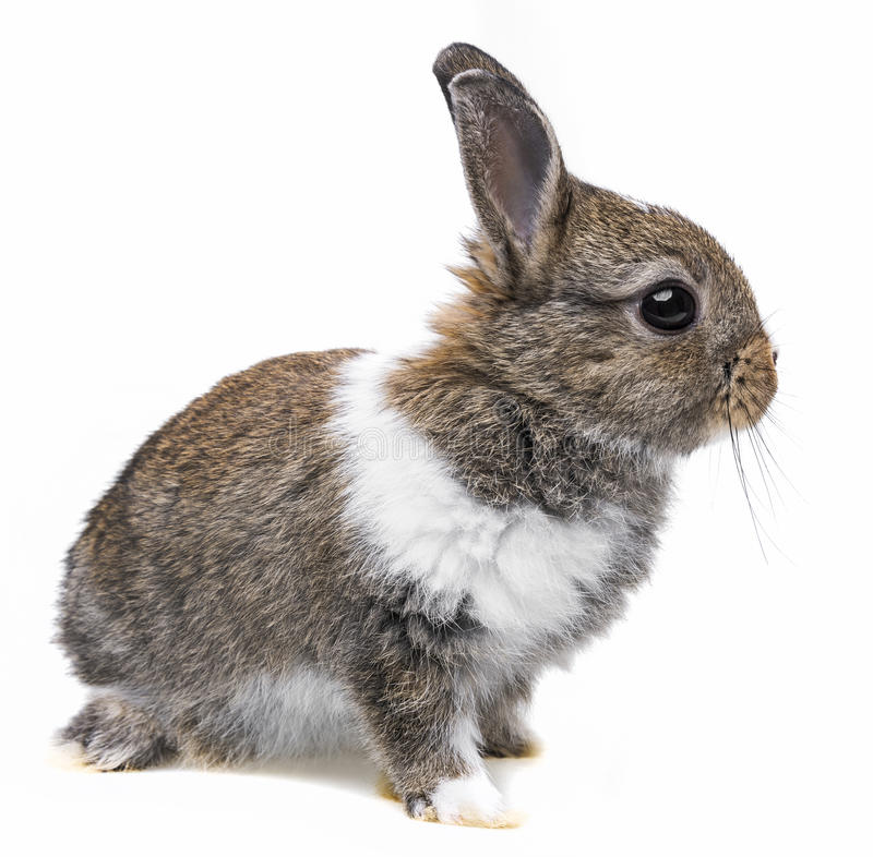 A little baby rabbit. On a white background stock photography