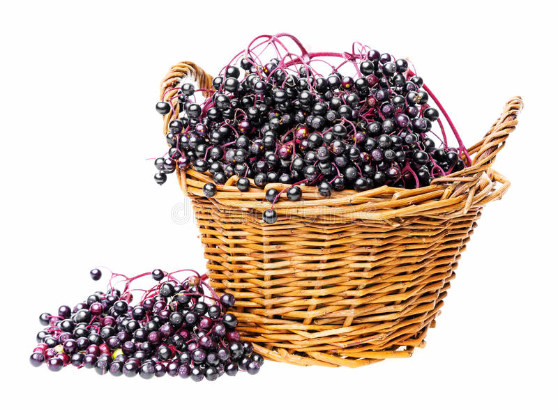 A little basket with black elder stock photos