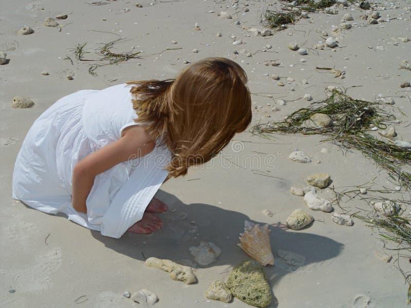 Little Beachcomber 1 royalty free stock image