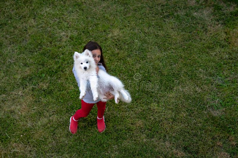 Little beautiful cute girl in casual clothes holding white samoyed puppy in hands, green grass around, summer time. Holidays royalty free stock photography