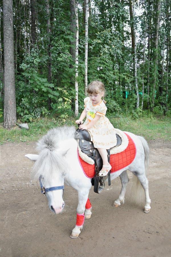 Little beautiful girl rides white pony stock image