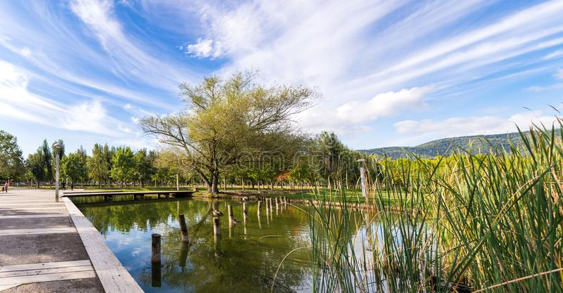 A little beautiful lake with wild ducks, in the park of Banyoles, Girona district, Catalonia, Spain royalty free stock photo