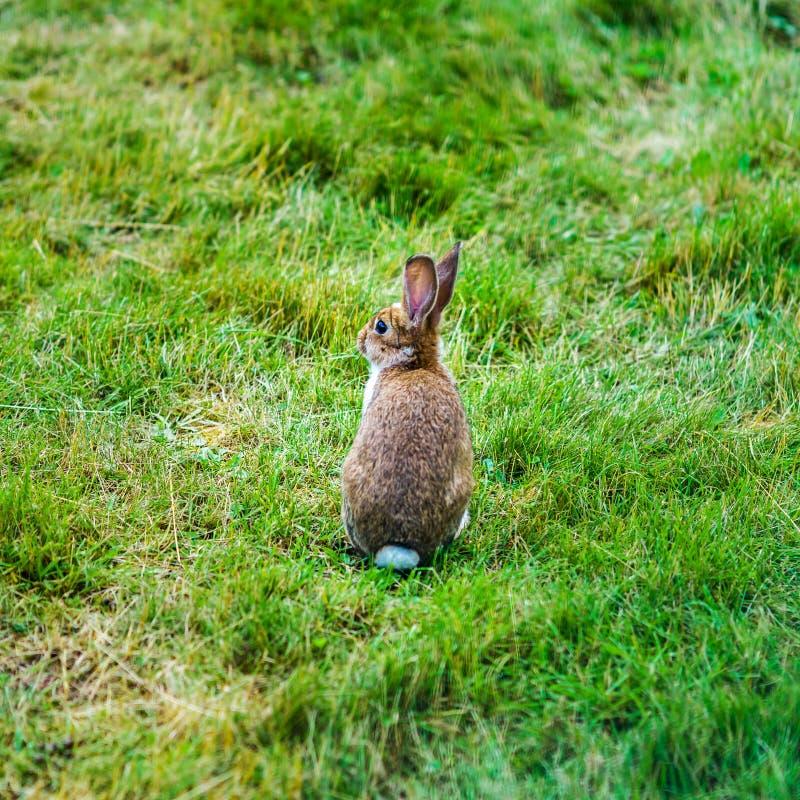 Little beautiful rabbit on green grass, farm mammals royalty free stock photography