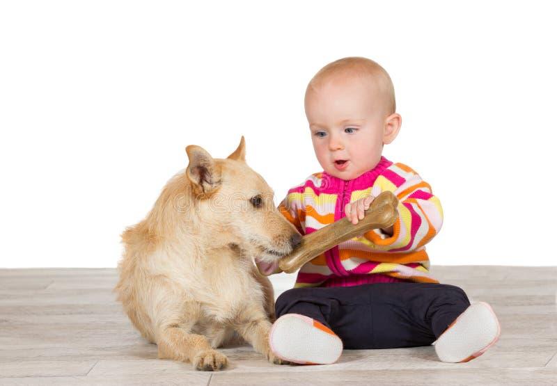 Little behandla som ett barn erbjuda hunden ett ben fotografering för bildbyråer