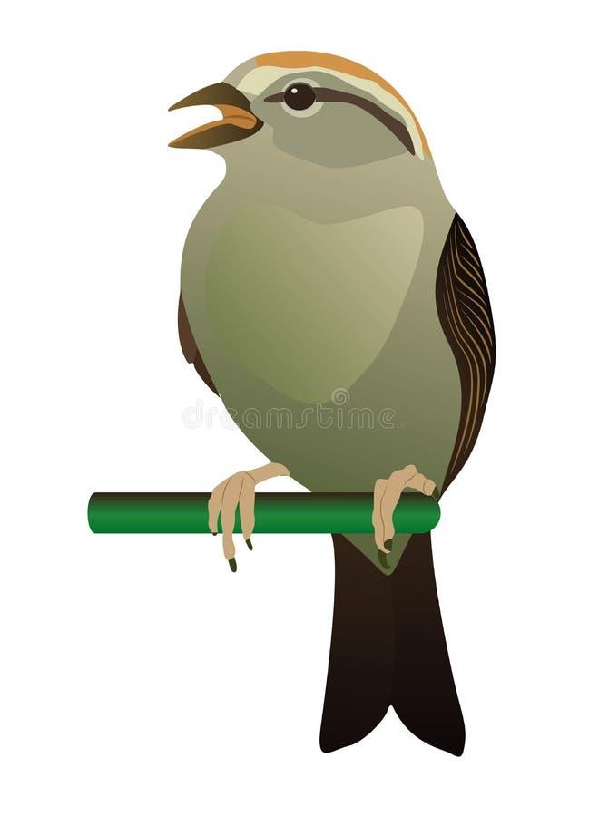 Download Little bird stock vector. Image of ornithology, birding - 23018823